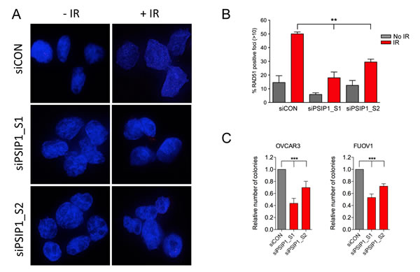 PSIP1 inhibition impaired DNA damage-induced homologous recombination function in ovarian cancer cell lines.