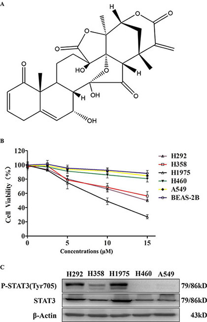 Physalin A exerts anti-proliferative effects in human NSCLC cells with activated STAT3.