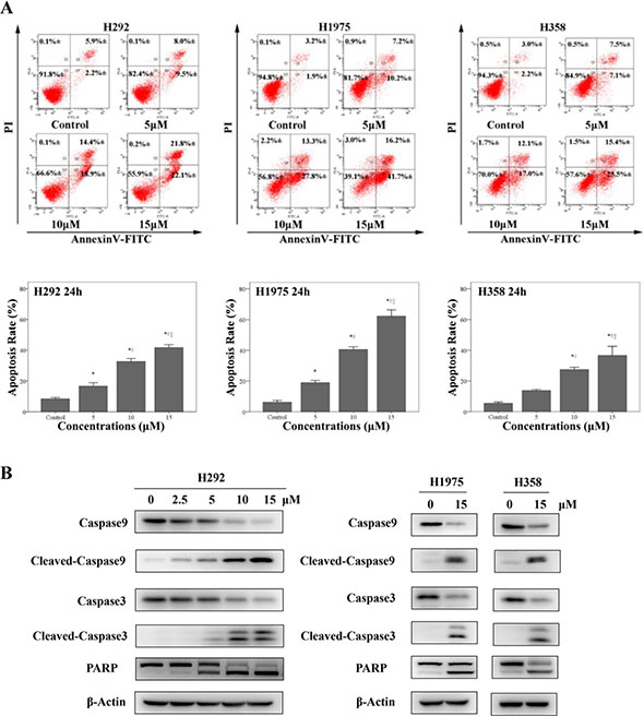 Physalin A induces apoptosis in human NSCLC cell lines.