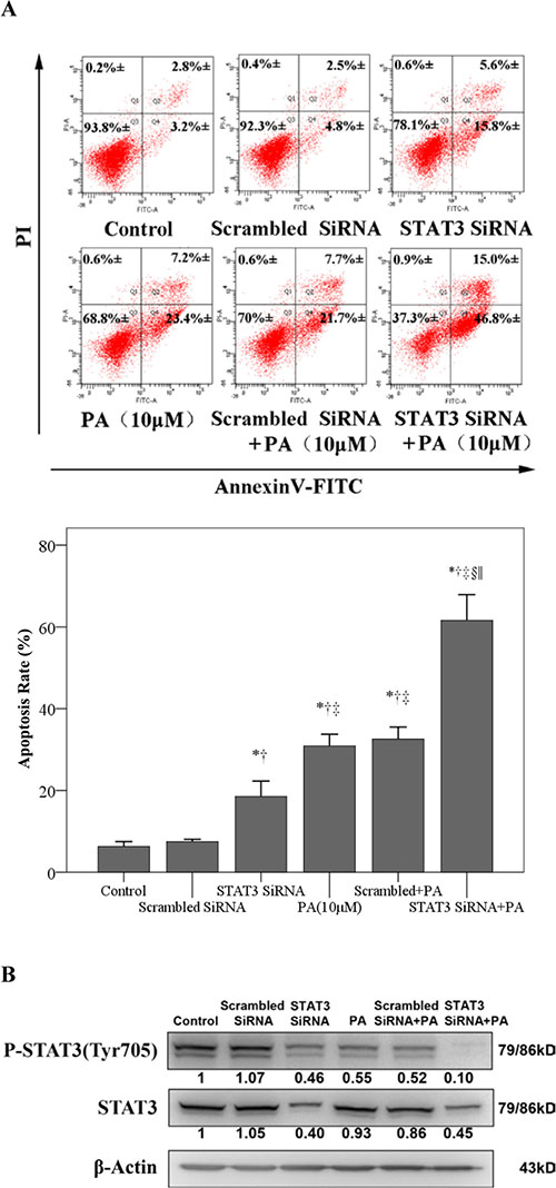 STAT3 siRNA enhances physalin A-induced apoptosis.