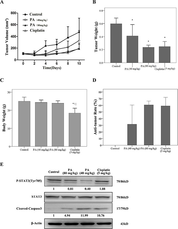 Physalin A suppresses tumor growth of H292 human NSCLC xenografts.