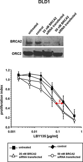 siRNA-mediated BRCA2 knockdown enhances the sensitivity of cancer cells towards TRAIL-R-mediated apoptosis.