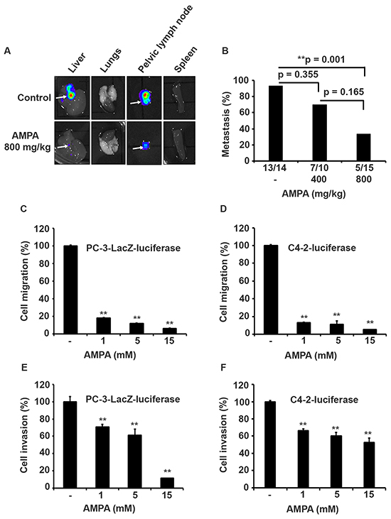 AMPA treatment inhibits prostate cancer metastasis in vivo and cell migration/invasion in vitro.