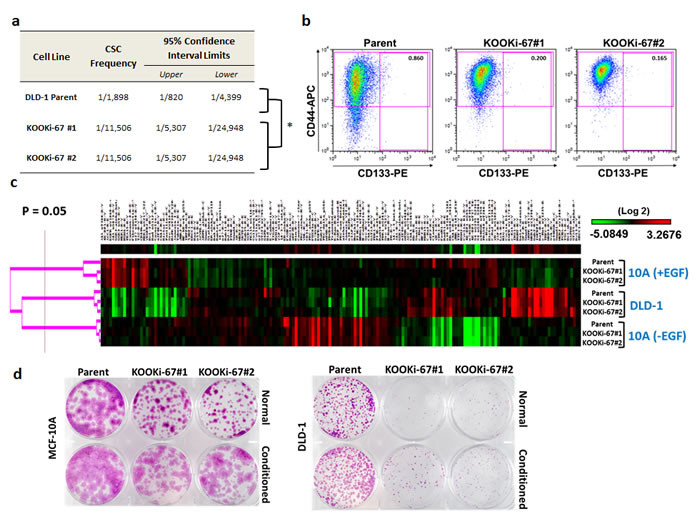 Cancer stem cell frequency and markers are decreased in KOOKi-67 clones without global changes in protein expression.