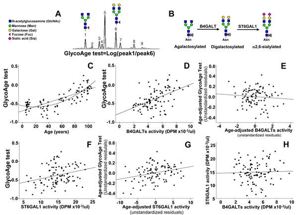 GlycoAge test and plasmatic glycosyltransferases.