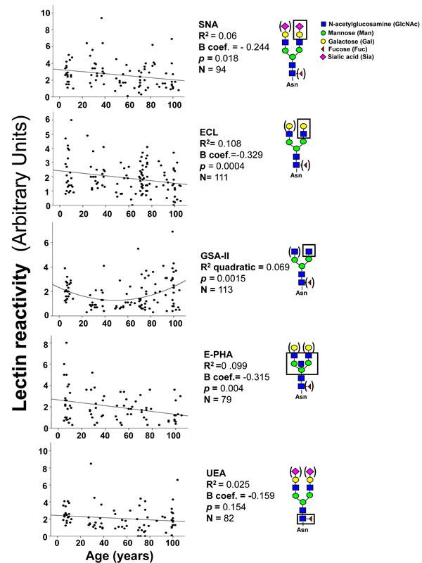 Lectin blot analysis of IgG glycosylation.