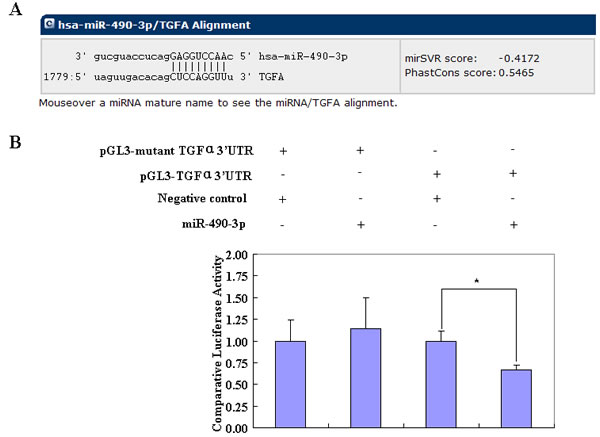 The bioinformatic software predicted that the 3' UTR of