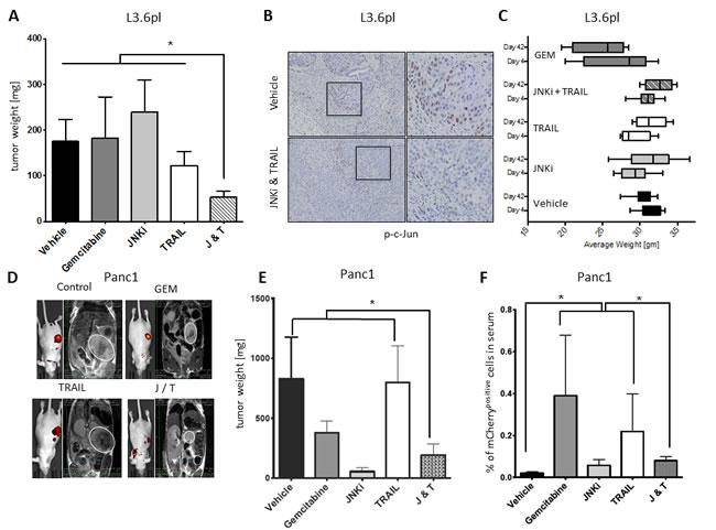 JNKi/TRAIL reduces tumor growth