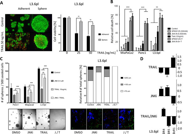 JNKi sensitizes PDAC cells and CSCs to the pro-apoptotic effects of TRAIL.