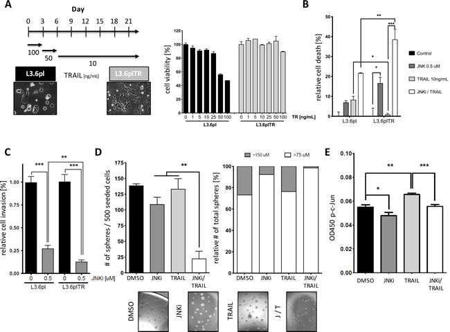 PDAC cells with acquired TRAIL resistance can be re-sensitized by JNK treatment to TRAIL-induced apoptosis.