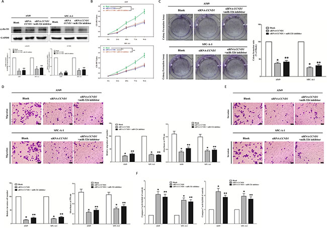 Inhibition of miR-326 does not reverse the anticancer efficacy of silence of CCND1 expression in vitro.