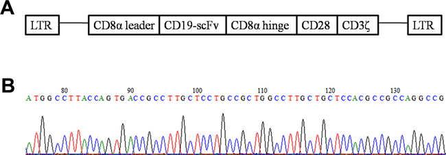 Structure diagram of CD19-CAR plasmid and part of the sequencing results.