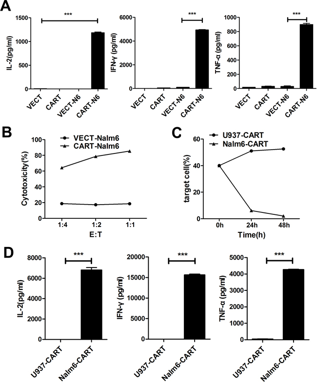 CAR-T cells showed specific cytotoxicity against CD19+ Nalm-6 cells but no effect on CD19− U937 cells.