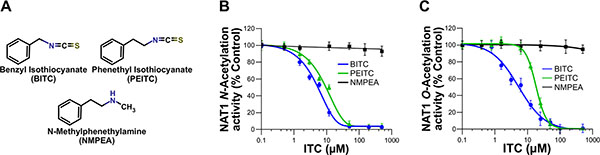 Dose-dependent inhibition of NAT1 activity by the aralkyl isothiocyanates benzyl isothiocyanate (BITC) and phenetyl isothiocyanate (PEITC).