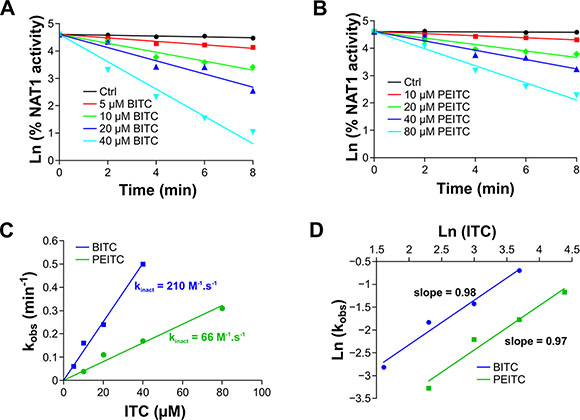 Kinetics analysis of ITCs-dependent inhibition of NAT1.