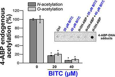 Effects of BITC on cellular NAT activities (N- and O-acetylation of 4-ABP) and on 4-ABP-DNA adducts.