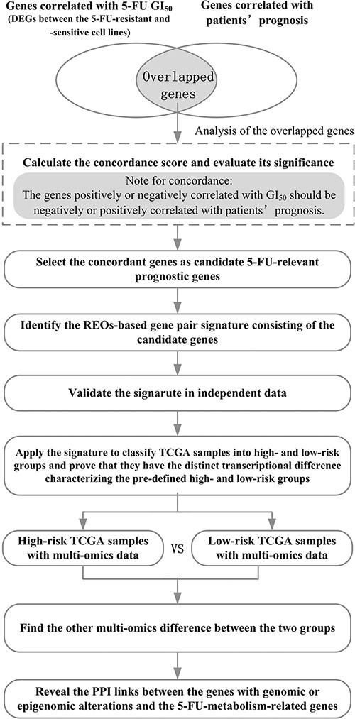 The flowchart for depicting the development, validation and application of the 5-FU-relevant prognostic signature.