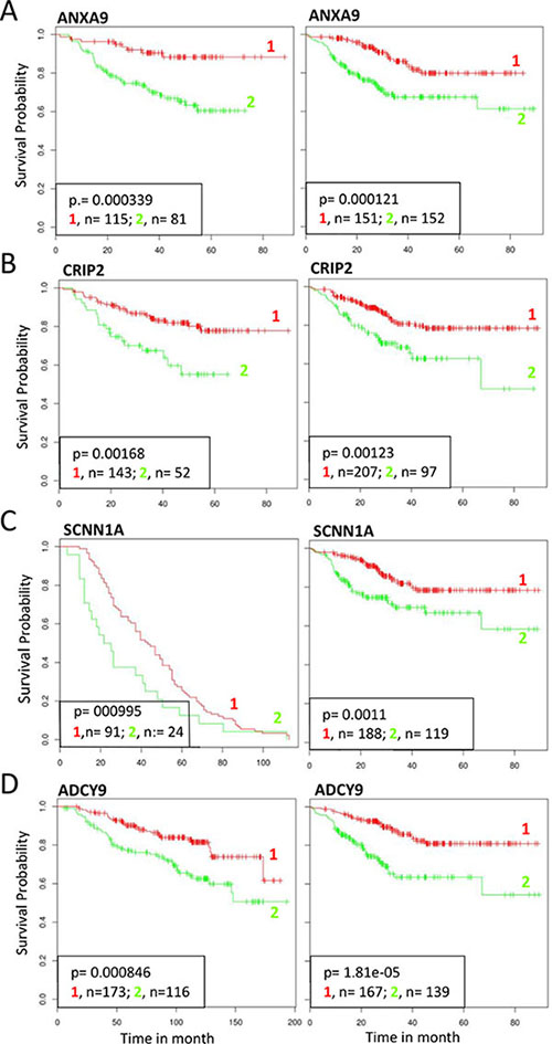 Survival analysis of selected genes repressed by p63 and SETDB1.