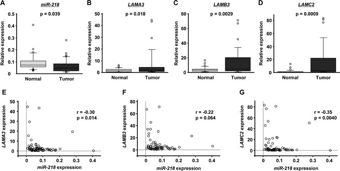 The expression levels of miR-218 and laminin-332 in HNSCC clinical specimens.