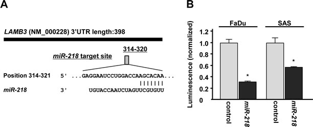 miR-218 directly regulates LAMB3 by luciferase reporter assay.