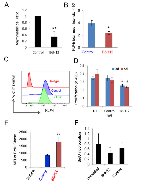 B6H12-Ab inhibits asymmetric cell division and cell proliferation.