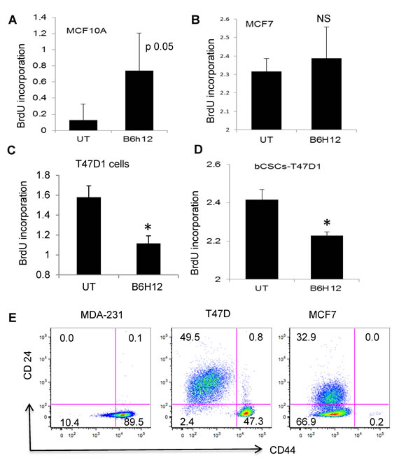 B6H12 specifically targets breast carcinoma cells that have high number of bCSCs/tumor initiating cells.
