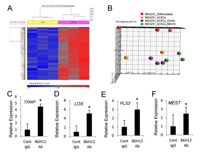 B6H12 alters gene expression of bCSCs.