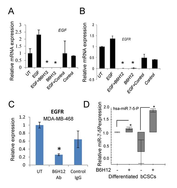 B6H12 suppresses EGF and EGFR mRNA expression in bCSCs.