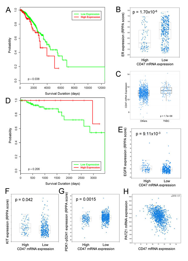 Analysis of CD47 expression in the TCGA invasive breast cancer data.