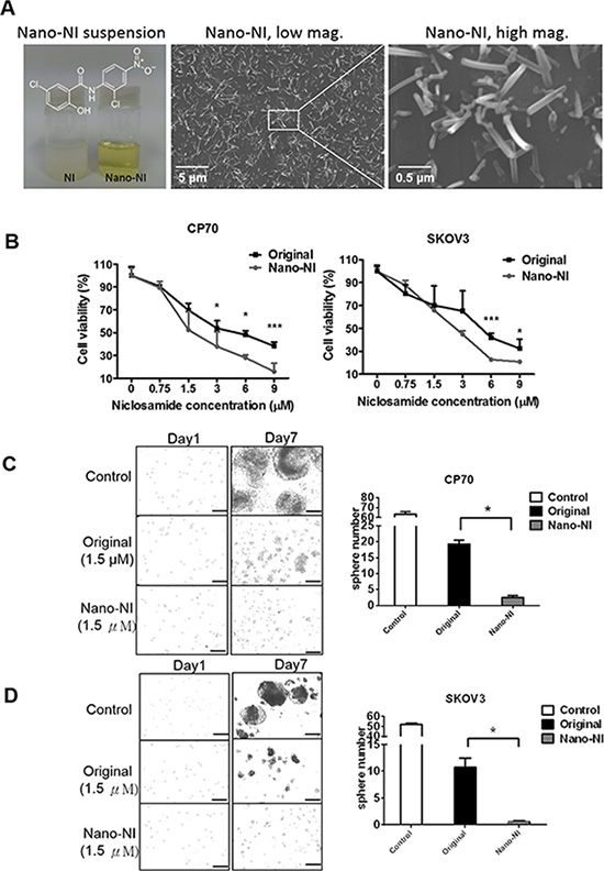 Nano-NI suppresses ovarian cancer cell proliferation more efficiently than the original form of niclosamide in vitro.