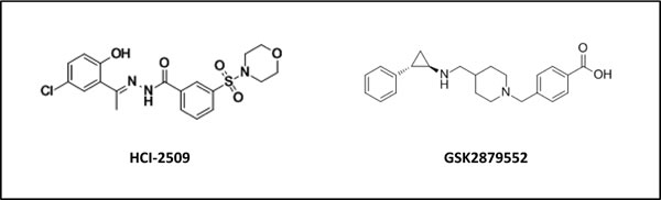 Chemical structure of HCI-2509 and GSK-2879552, reversible and irreversible inhibitors of LSD1 respectively.