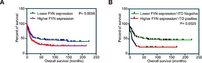 Overall survival of AML patients with higher and lower FYN expression: Z-score of mRNA expression from data set GSE14468 was used to divide higher (n = 40) and lower (n = 40) FYN expressing patients.