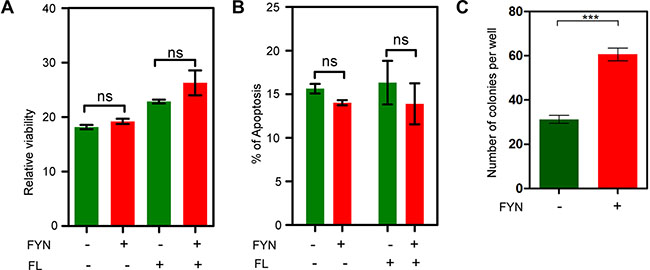 FYN expression significantly contributes to colony formation.