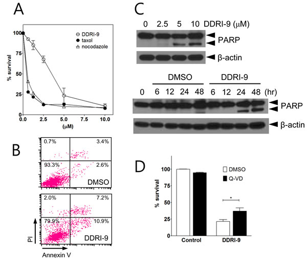 DDRI-9 induces cell death.