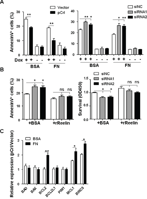 Reelin protects H929 cells from Doxorubicin induced apoptosis.
