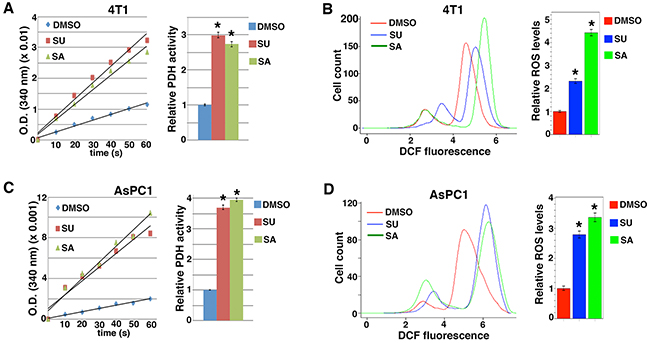 Src inhibitors activate PDH and enhance ROS production.