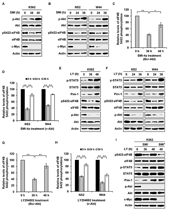 Long time inhibition of one signaling activates the other pathway and restores eIF4B Ser422 phosphorylation.
