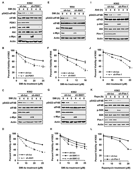 Silencing one pathway confers Abl transformants more sensitive to inhibition of the other pathway.