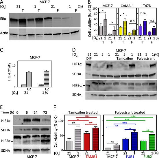Effects of hypoxia and antiestrogen treatment in estrogen receptor-positive breast cancer cells.