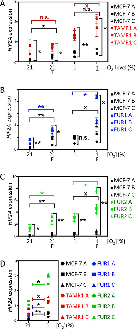 Effect of hypoxia and antiestrogen on HIF2α mRNA expression in MCF-7 and antiestrogen resistant breast cancer cells.