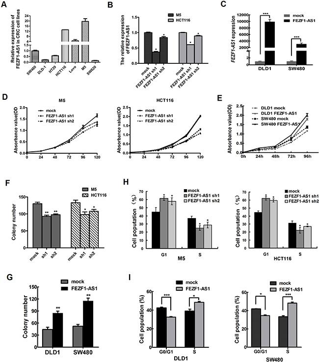FEZF1-AS1 promotes CRC cell proliferation in vitro.