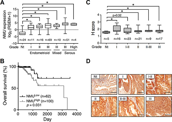 The expression profile of NMU and corresponding survival rate in human endometrial cancer.