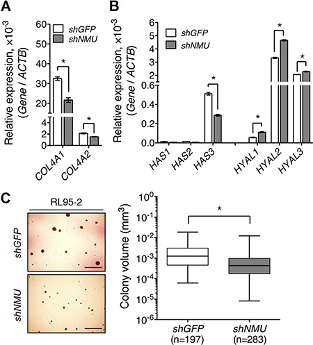 Knockdown of NMU decreases the expression of collagen IV and hyaluronan while at the same time reducing the anchorage-independent growth of RL95-2 cells.