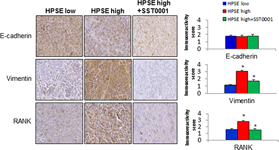 HPSE-High MM tumors exhibit a strong mesenchymal phenotype that can be reversed by HPSE inhibition.