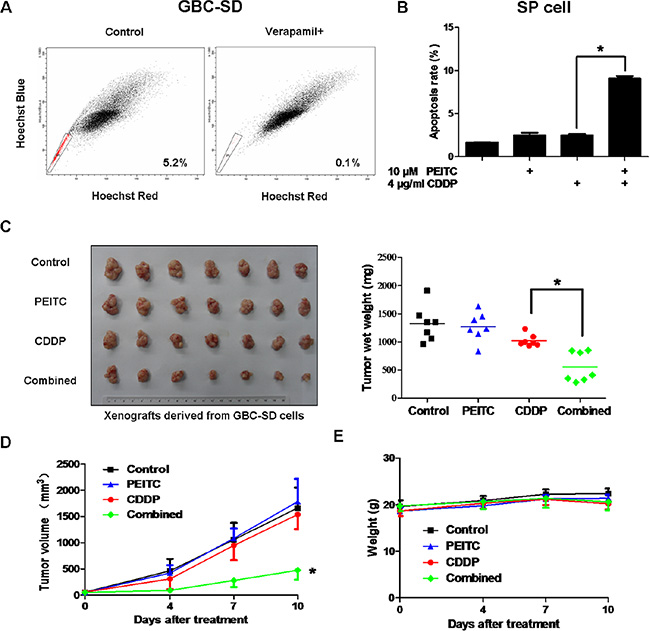 PEITC-CDDP co-treatment sensitizes SP cells and inhibits xenograft tumor growth without obvious toxic effects.