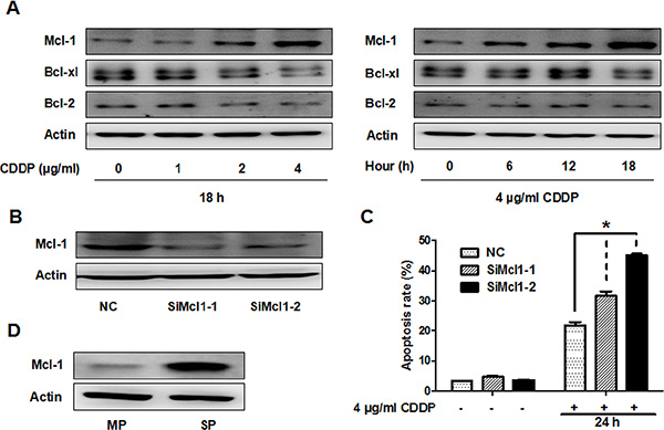 CDDP resistance is partially associated with Mcl-1 in GBC-SD and SP cells.