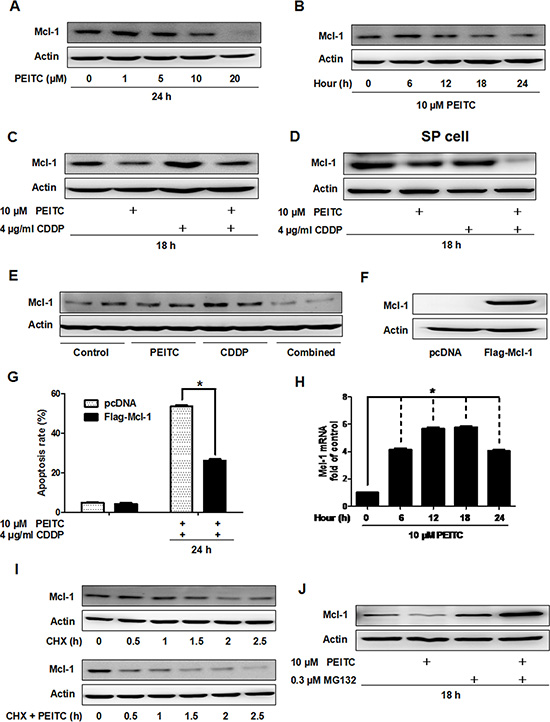 PEITC induces proteasomal degradation of Mcl-1 in vitro and in vivo.