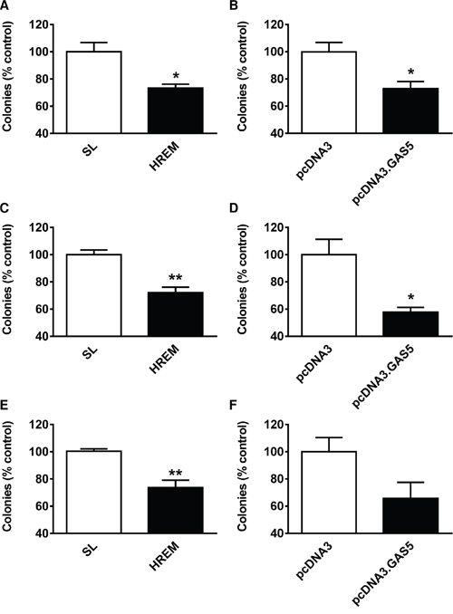 Effect of the GAS5 HREM DNA oligonucleotide on the clonogenic activity of breast cancer cells.