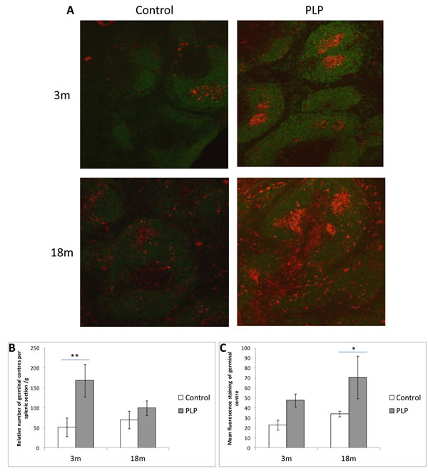 Effect of age and maternal diet on splenic B cell and germinal centre staining.