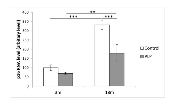 Effect of age and maternal diet on relative gene expression of p16 in the spleen.